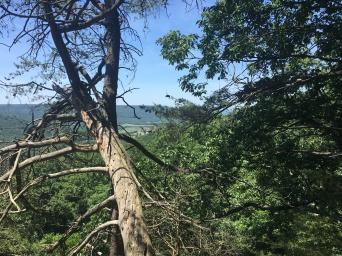 Pelham Pointe Mountaintop Cabin Rental - Bluff Hike