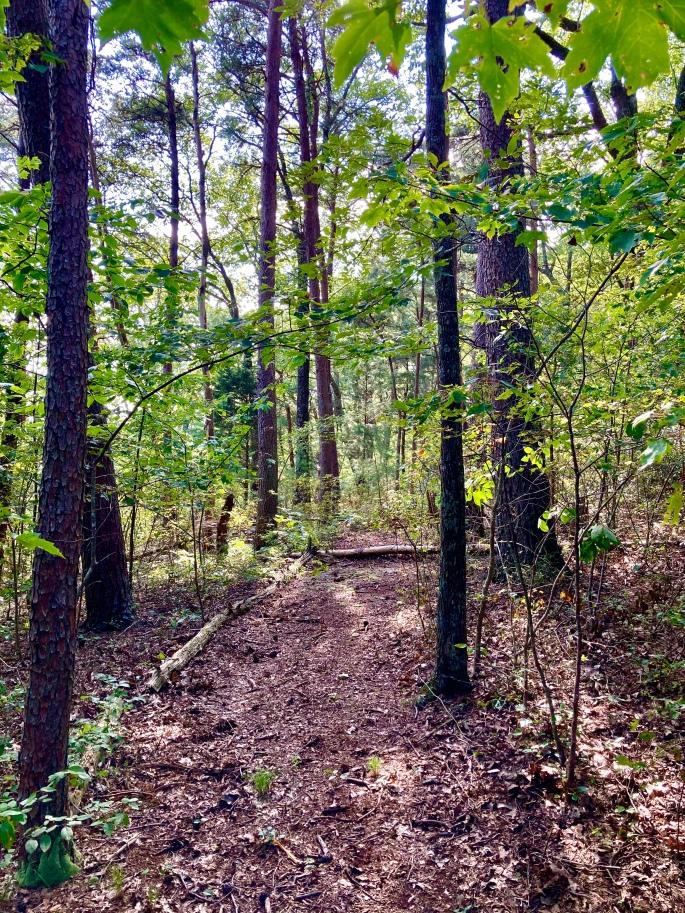 Fiery Gizzard Trail near Pelham Pointe Mountaintop Cabin Rental